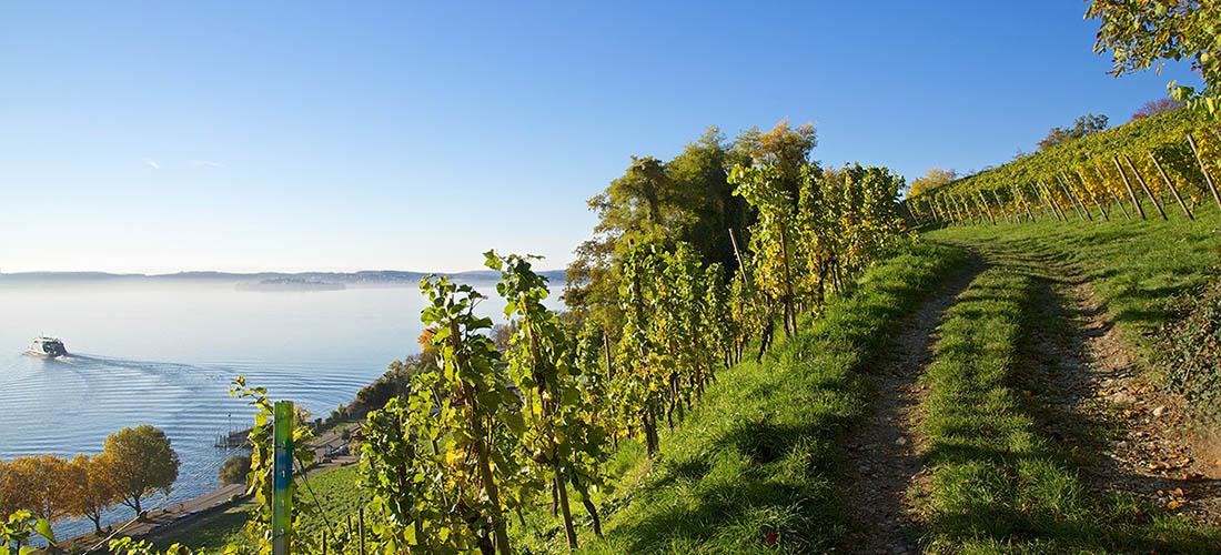 Weingut Markgraf von Salem am Bodensee